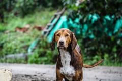 dog-1690824_960_720